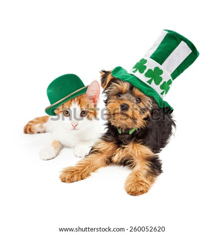 Yellow gold kitten laying next to a Yorkshire Terrier puppy. Both wearing St Patrick's Day hats - stock photo