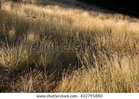 Yellow grass field nature background  - stock photo