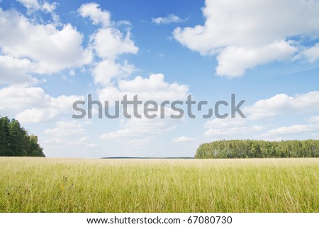 Yellow grass field near forest edge. Day. Landscape. - stock photo