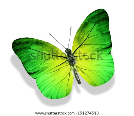 Yellow green butterfly , isolated on white