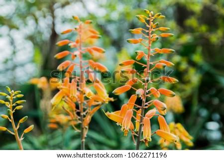 Yellow hanging flowers stock photo download now 1062271196 yellow hanging flowers mightylinksfo