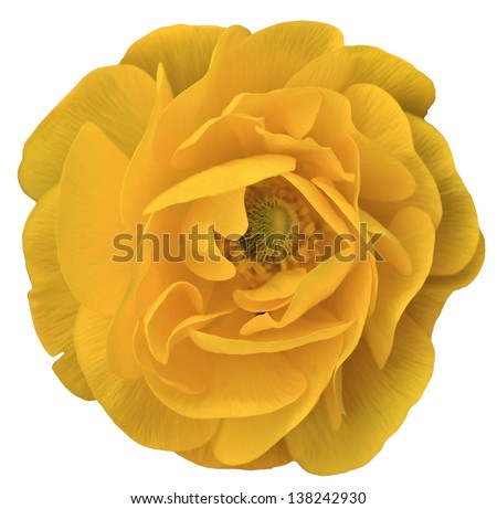 Yellow isolated flower - stock photo