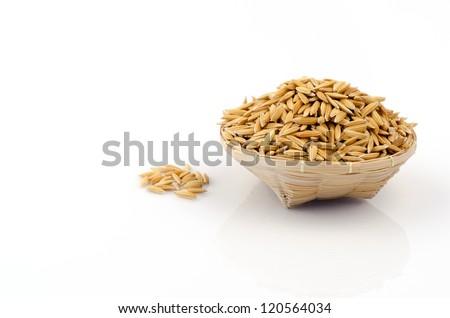 yellow jasmin ripe rice on white - stock photo