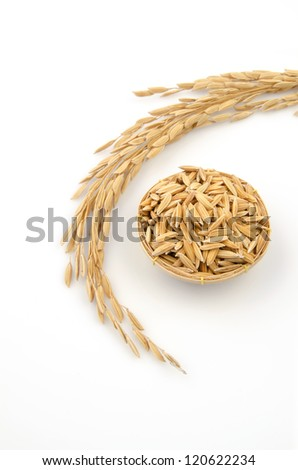 yellow jasmine rice rice on white background - stock photo