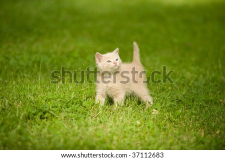 Yellow kitten standing in the grass while playing