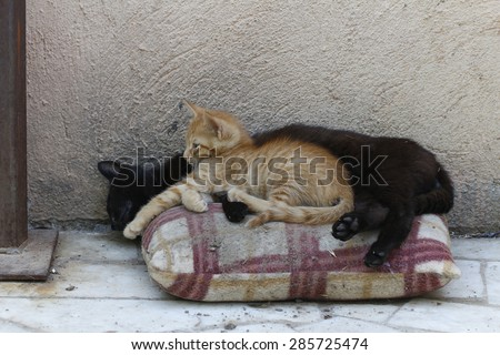 Yellow kitten with mom cat in the street. Cat mom sleeping with kitten. - stock photo