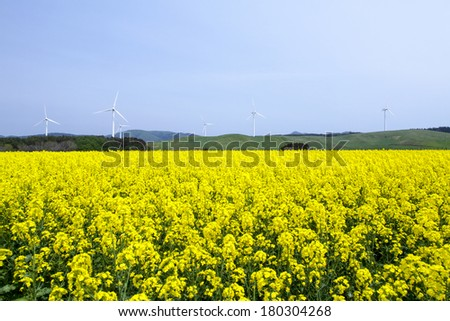 Yellow landscape with turbines  - stock photo