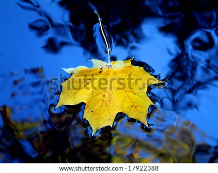 Yellow leaf in blue water - stock photo