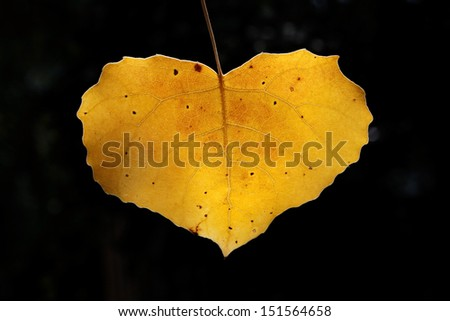 Yellow leaf in heart shape