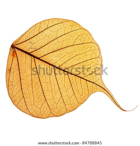 yellow leaf , macro, isolated on white