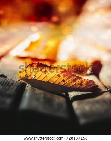 Yellow leaf on a bench with a bokeh