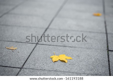 Yellow leaf on a grey ground