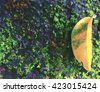 Yellow leaf on moss abstract background, yellow leaf digital illustration, yellow leaf on old stone, yellow leaf on mossy stone, yellow leaf composition, yellow leaf background with place for text - stock photo