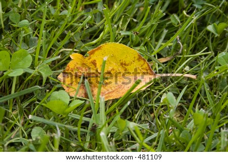 Yellow leaf on the grass - stock photo