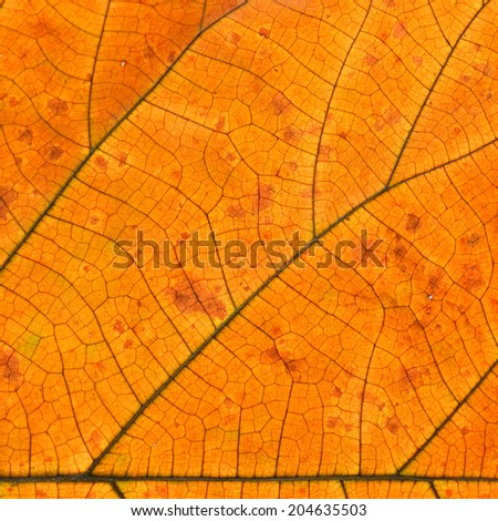 Yellow leaf texture closeup background.