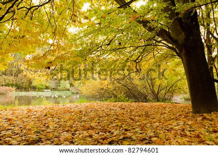 Yellow leafs in park at fall - stock photo