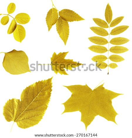 Yellow leaves collage - stock photo
