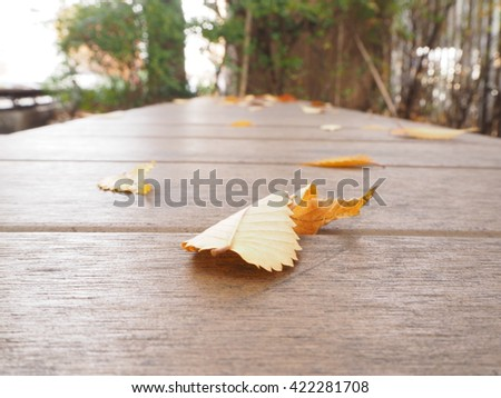 Yellow leaves fall on a brown bench in autumn - stock photo