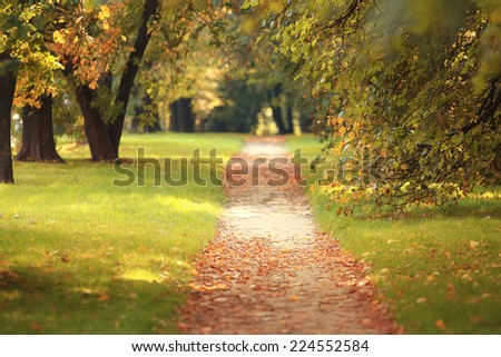 yellow leaves on an asphalt blurred urban background autumn