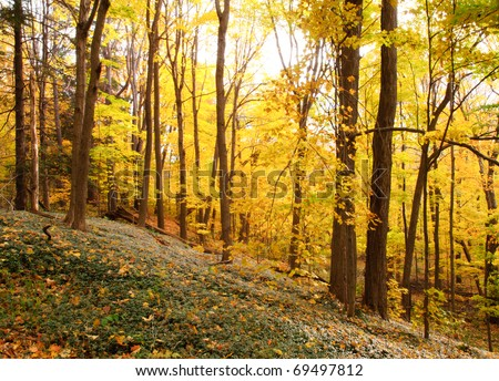 yellow leaves on trees in fall