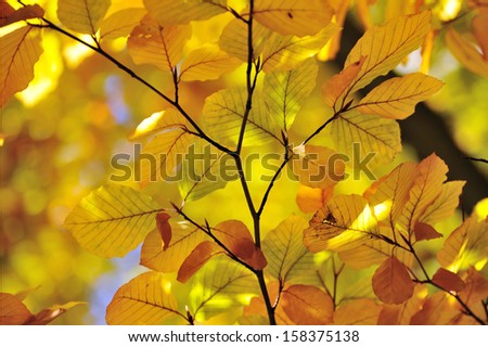 yellow leaves over abstract background - stock photo