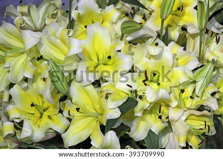 Yellow lily flowers background  - stock photo