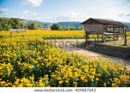 Yellow marigolds in the garden, the mountains, the village on the hill.