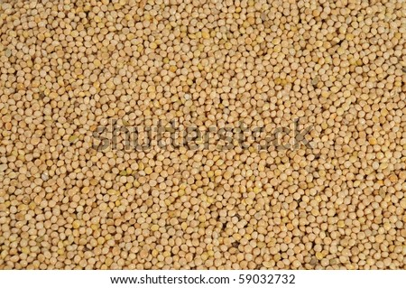 yellow millet close up as background - stock photo