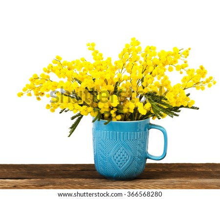 Yellow Mimosa bouquet in a yellow cup on a wooden table, isolated on a white