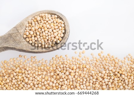 Yellow Mustard Seeds - Sinapis alba