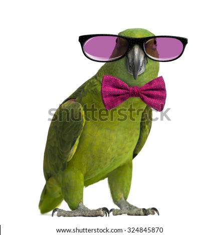 Yellow-naped parrot wearing glasses and a bow tie, isolated on white - stock photo