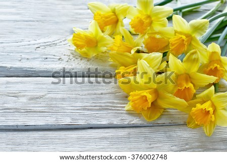 Yellow narcissus on wooden background  - stock photo
