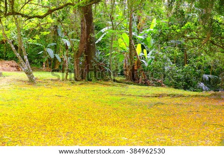 Yellow natural carpet. Ground covered of little flowers from the tropical tree Tipuana tipu with other plants as background, Southern Brazil      - stock photo