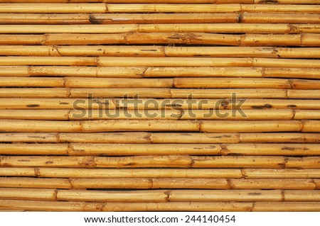 Yellow natural wall from a bamboo/ Texture wall from a bamboo - stock photo