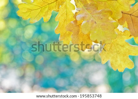 Yellow oak leaves on a background of multicolored trees - stock photo