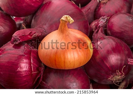 Yellow onion on a background of red onions - stock photo