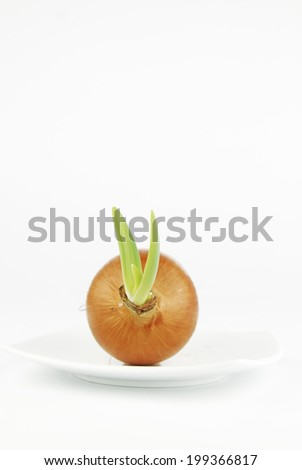 Yellow onion with green shoots on white background