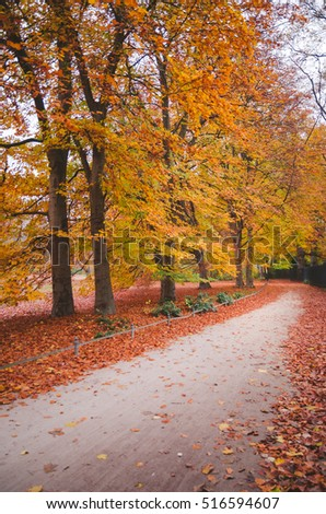 Yellow, orange and red autumn leaves on a beautiful park