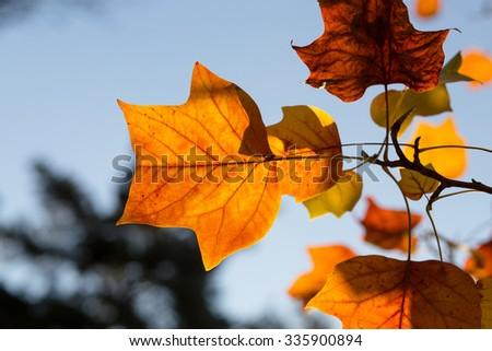 Yellow, orange and red autumn leaves on sunny day in Oxford University Parks, fall landscape with colorful foliage, beautiful background - stock photo