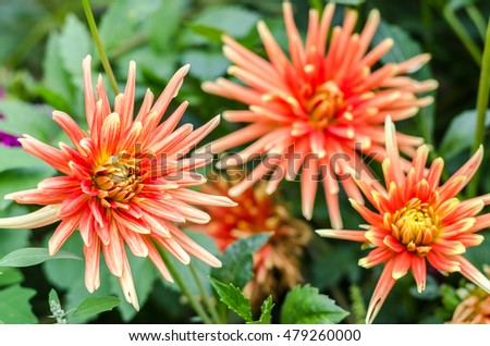 Yellow, orange flowers in garden