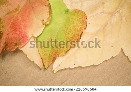 yellow orange leaves on a recycled paperboard surface, still life - stock photo