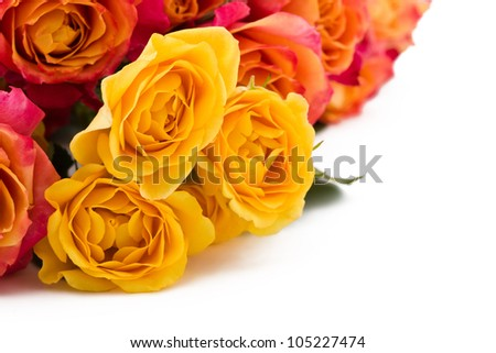 yellow, orange roses on a white background - stock photo