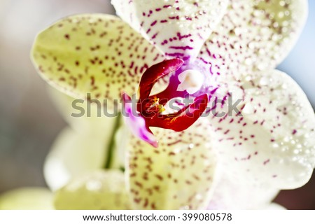 Yellow orchid  flower  in nature ,fresh ,nature ,amazing orchids, points, sun, violet ,green background ,home ,plants ,long ,vase ,apartment
