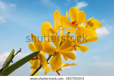Yellow Orchid Flower isolated on blue sky background - stock photo