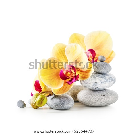 Yellow orchid flowers and spa stones isolated on white background clipping path included