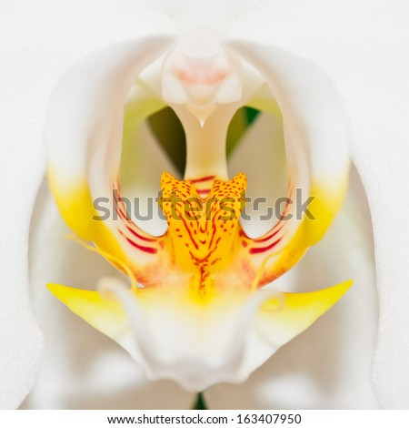 Yellow orchid isolated on white background. - stock photo