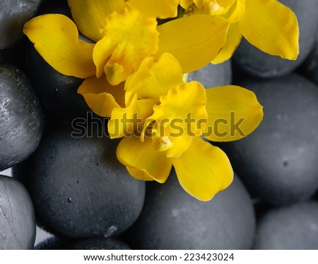 Yellow orchid on back stones background - stock photo