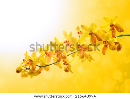 Yellow orchid on colorful yellow background - stock photo