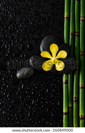 Yellow orchid with stones on bamboo grove on wet background - stock photo