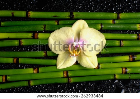 Yellow orchid with thin bamboo grove on wet background - stock photo